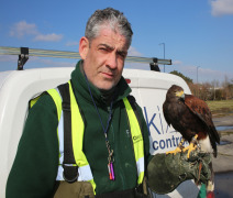 Luna the Harris Hawk Joins Cleankill Team